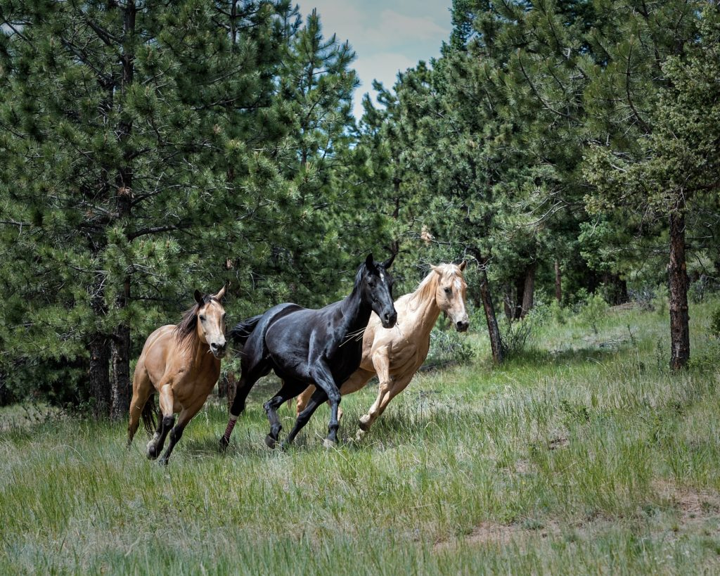 stablebuzz legitimize your stable accounting and financials